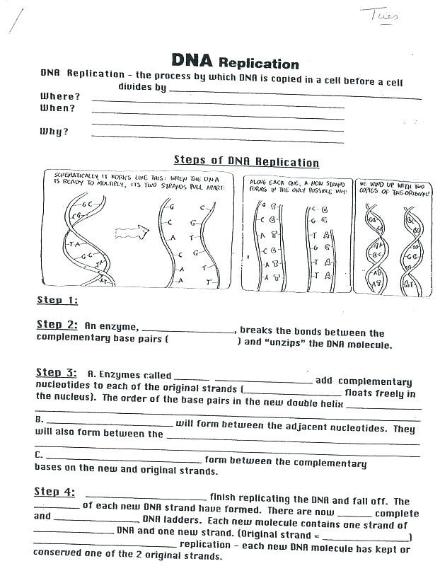 Dna Coloring Worksheet Answers X Biology Corner ...