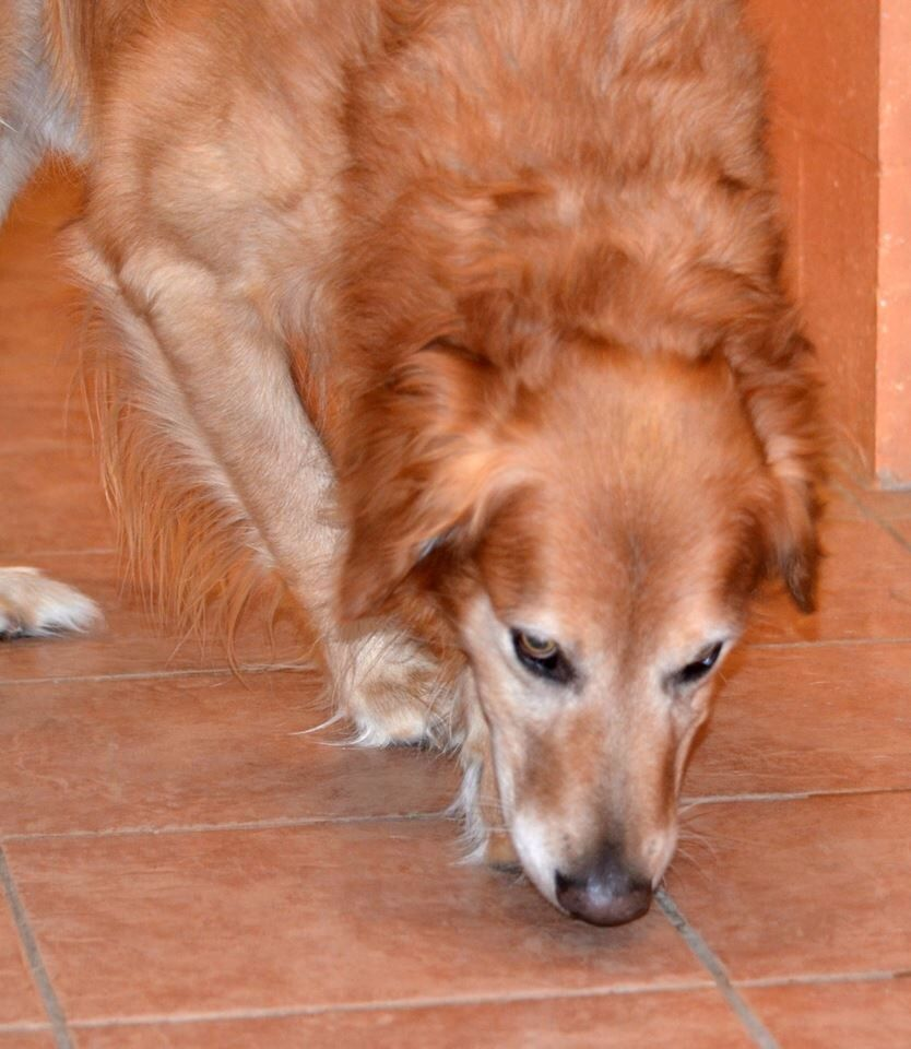 Pin By Us Lost Dog Registry On Lost And Found Pets Losing A Dog