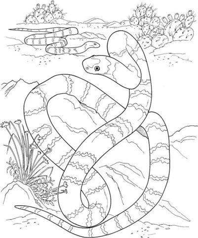 Una Larga Serpiente en el Desierto Dibujo para colorear. Categorías ...