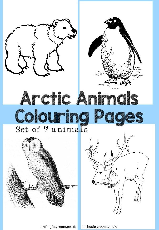 Arctic Animals Colouring Pages Arctic animals, Artic