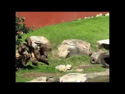 Otters Chasing Butterfly