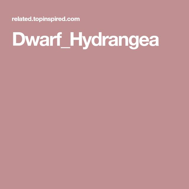 Dwarf Hydrangea, Hydrangea, Dwarf