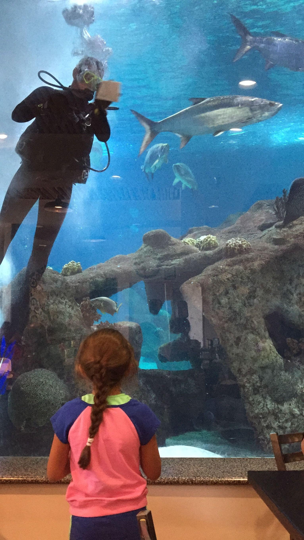 Marine Biology Jobs In Aquariums Laairfan Co