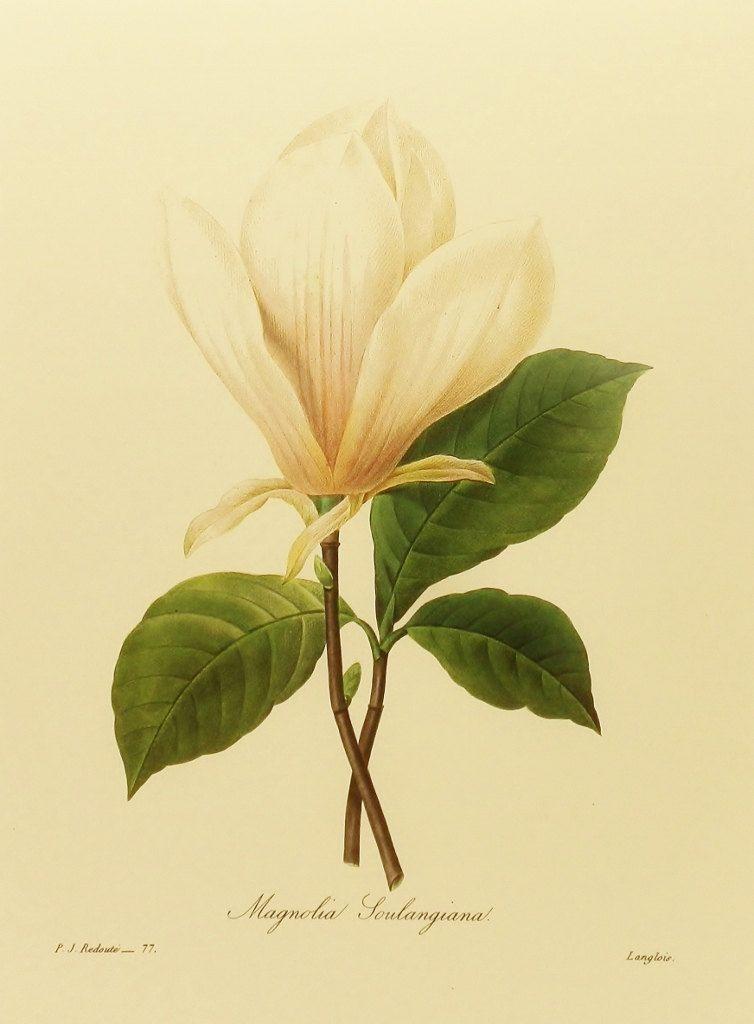 Magnolia Art Botanical, Classic Southern Decor (White Flower Wall ...