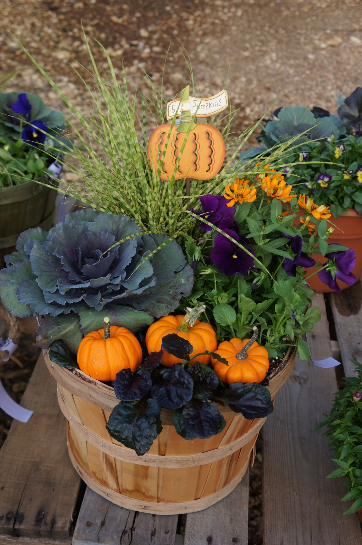 Lakeside Collection Patio Furniture: Fall Patio Pot (with PUMPKINS)