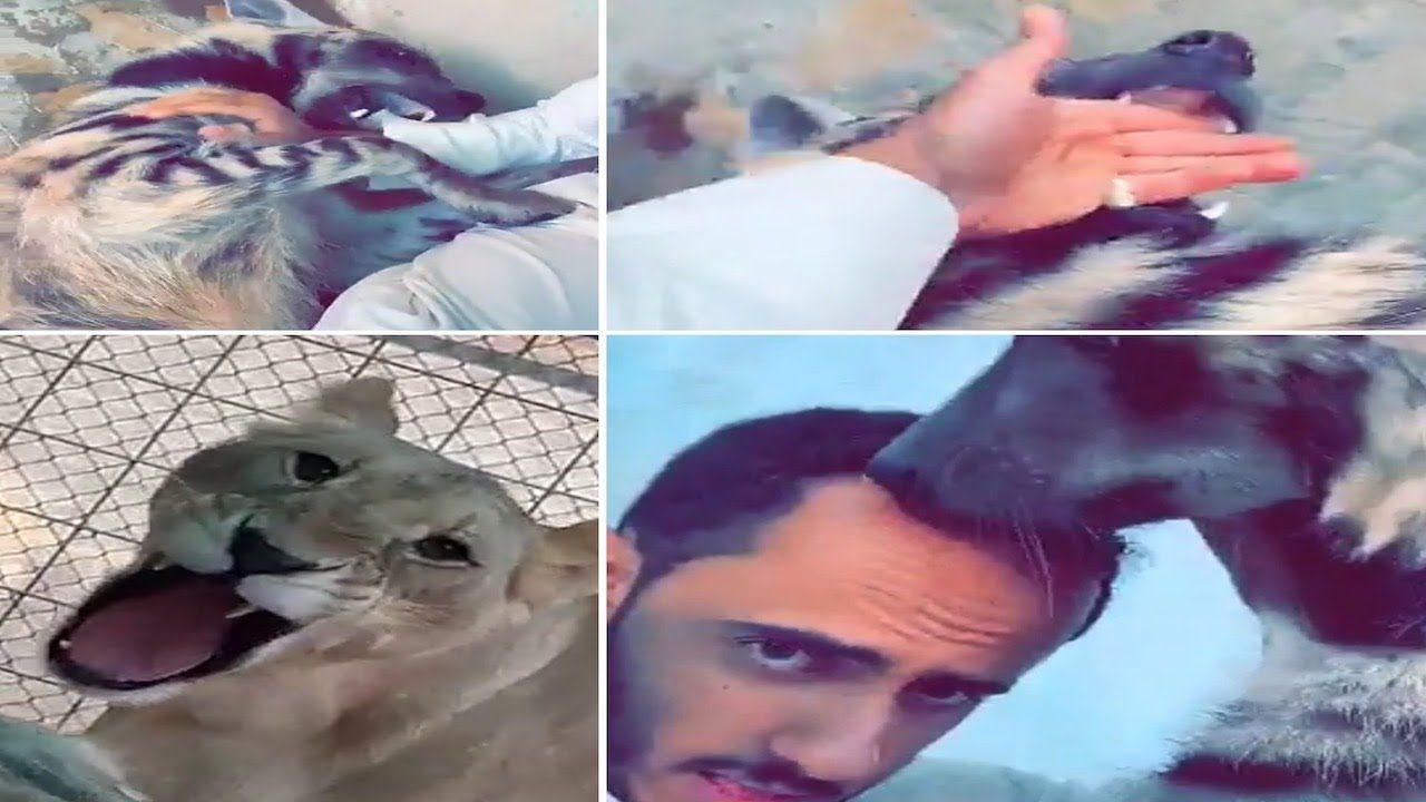 الضبعة أقوى فك من الثديات سبحان الله أسامه الدغيري Animals