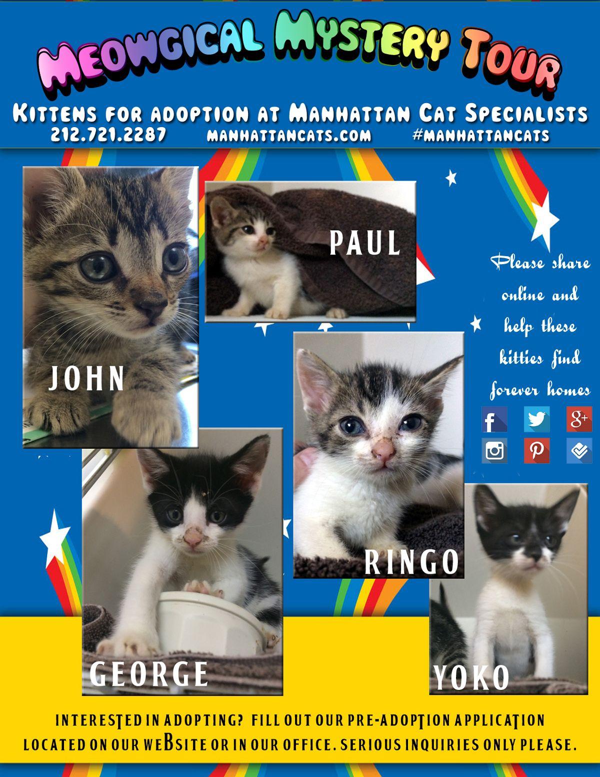 Adoption Corner With Images Kitten Adoption Cat Adoption Kittens