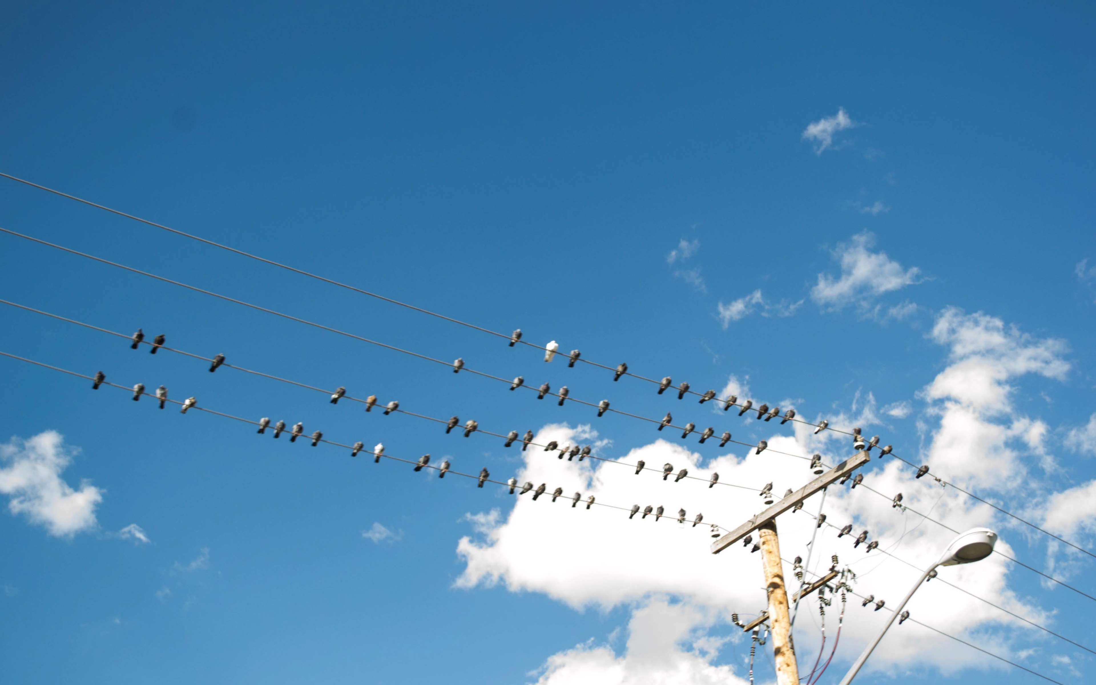 Abstract Bird Birds On A Wire Blue Blue Sky Clear Electrical