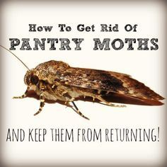 Have Pantry Moths Infested Your Food? Hereu0027s Help. Pantry MothsHow To Get  RidPantriesAnd ...