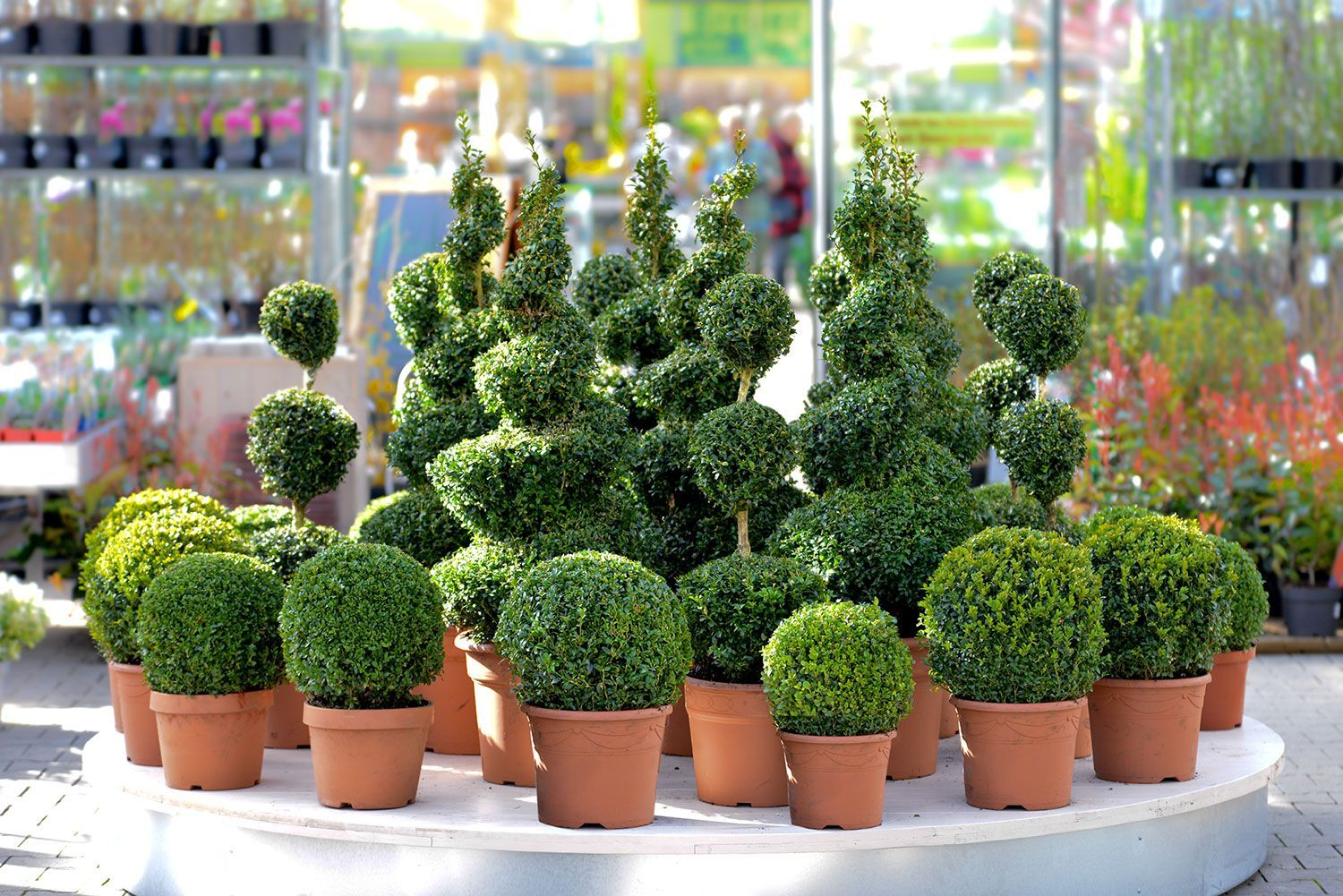 Artificial Outdoor Plants Fake Trees Artificialplantsdecoryards Artificial Plants Small Artificial Plants Artificial Plants Outdoor
