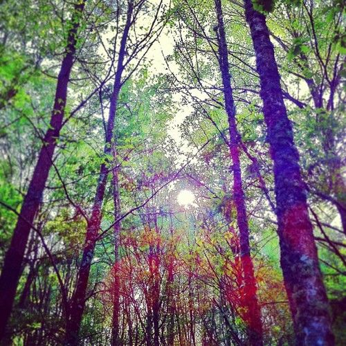 Bosque Gallego Ourense Carballos Robles Sol Naturaleza Galiciacalidade Primavera Bandofhorses Naturaleza Fotos