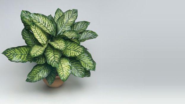 10 plantas que son venenosas para los perros interesante - Plantas ornamentales venenosas ...