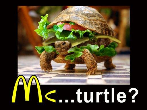 Mc...Turtle??