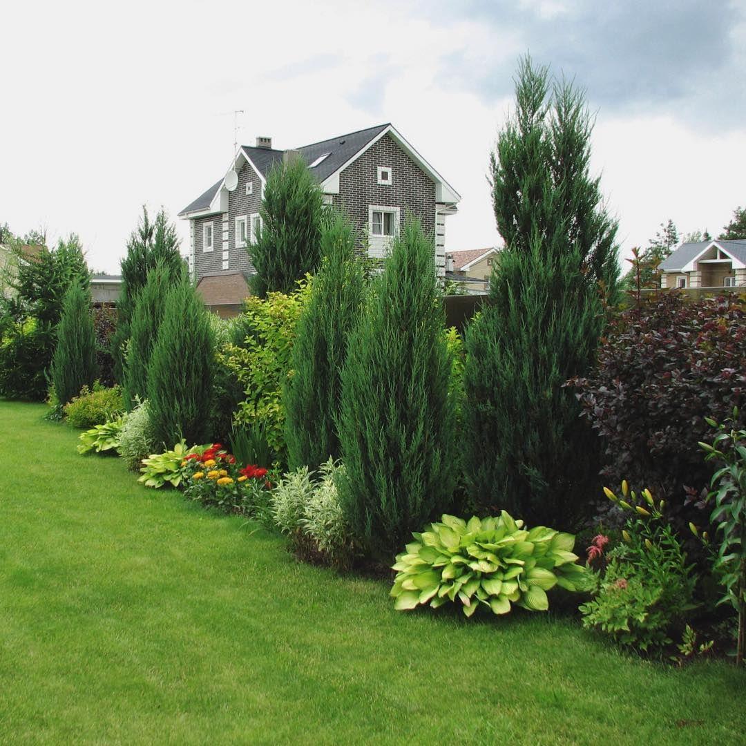 Miksborder Spustya 5 Let Posle Posadok Privacy Landscaping Landscape Design Backyard Landscaping Designs Backyard landscaping ideas with arborvitae