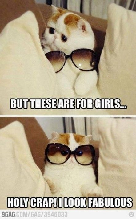 So Cute Funny Animal Pictures Animal Jokes Cute Funny Animals