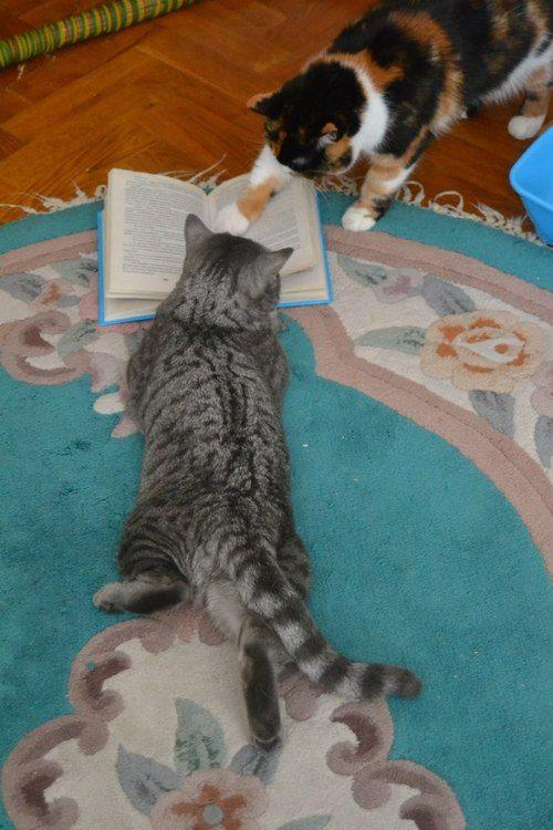 Club de lectura de gatitos.