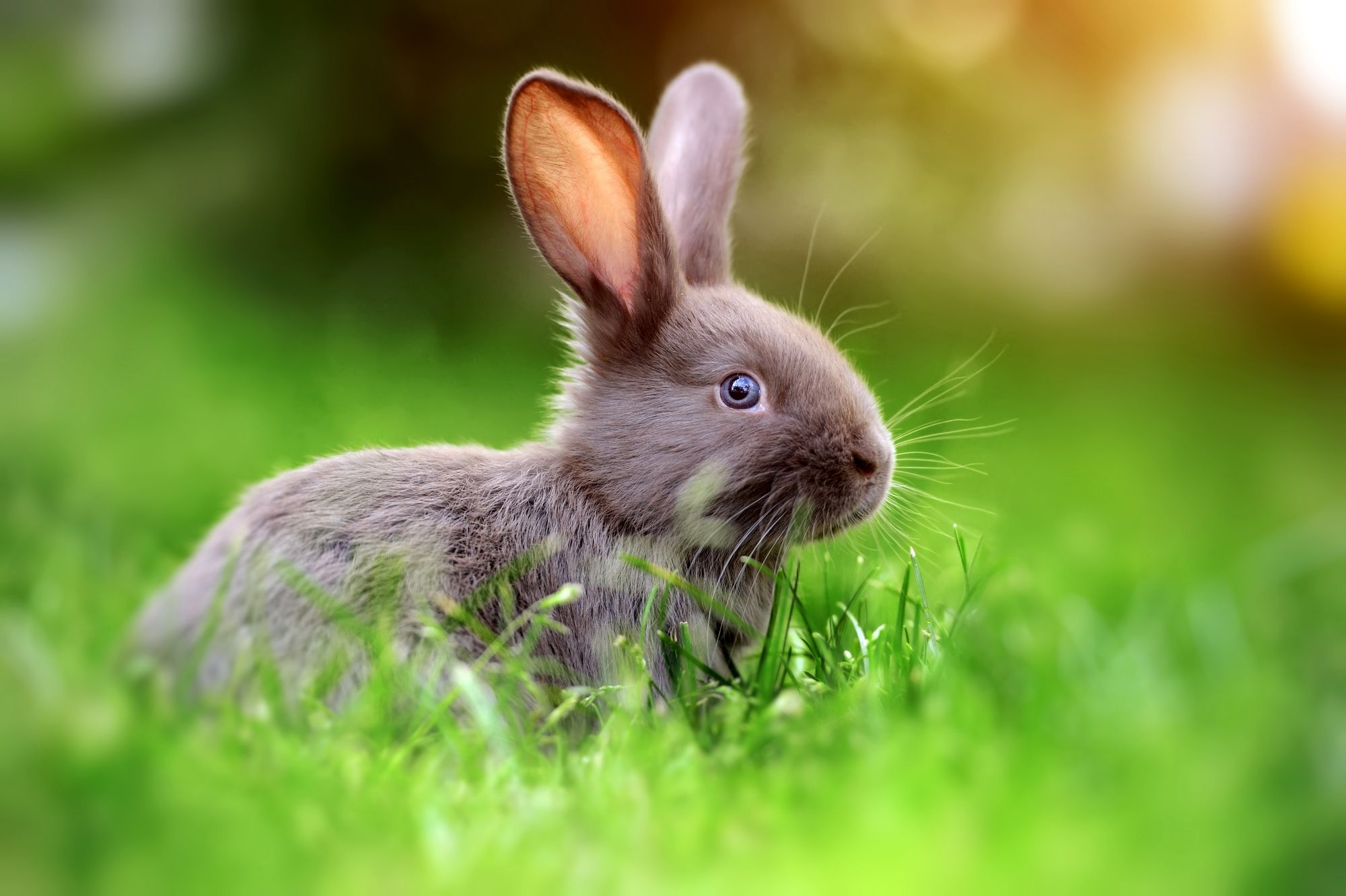 Rabbits Remain One Of The Nation S Favorite Pets And No Wonder Because They Are Amazing Animals Did You