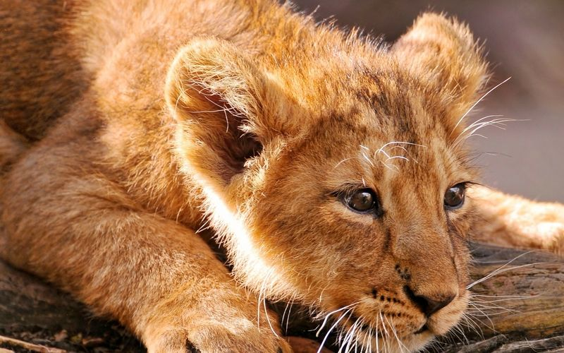 wildlife animals pictures - Google Search