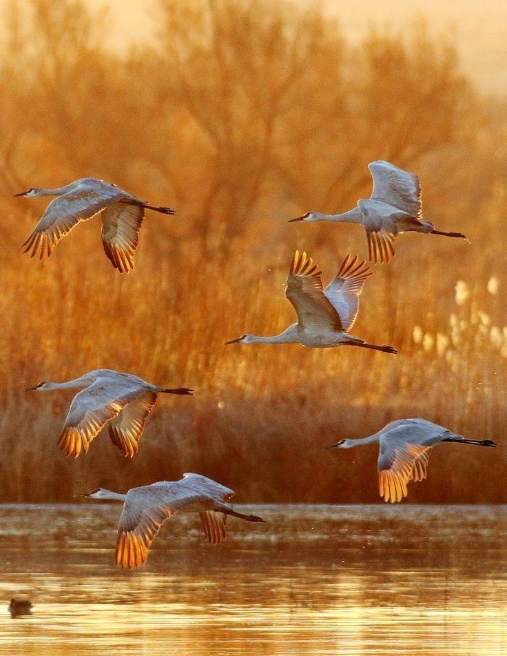 vögel im flugbild von barbara rathmanner auf flying birds