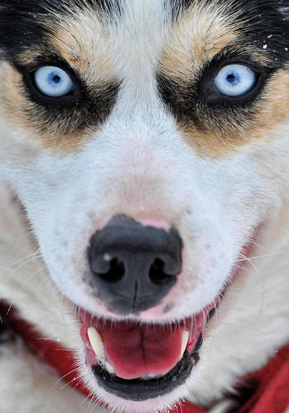 Husky Eyes | Wildlife | Pinterest