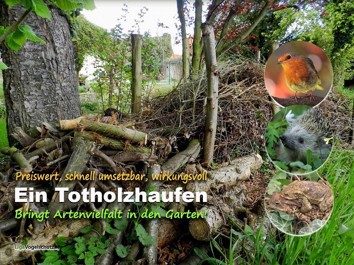 Totholzhaufen Im Garten Liga Vogelschutz Naturgarten Garten Vogel Im Garten