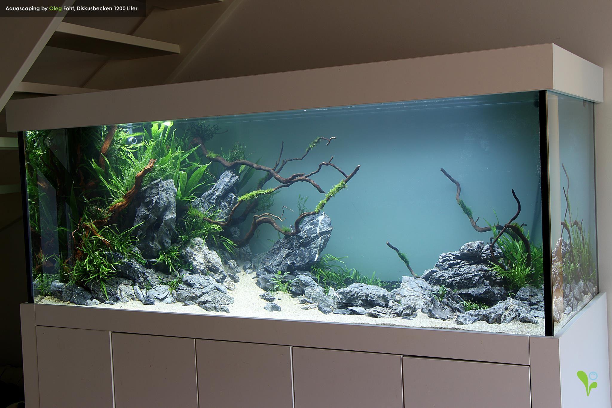 e92ba3b40210eb5ce840795febfeac44 Luxe De Crevette Aquarium Des Idées