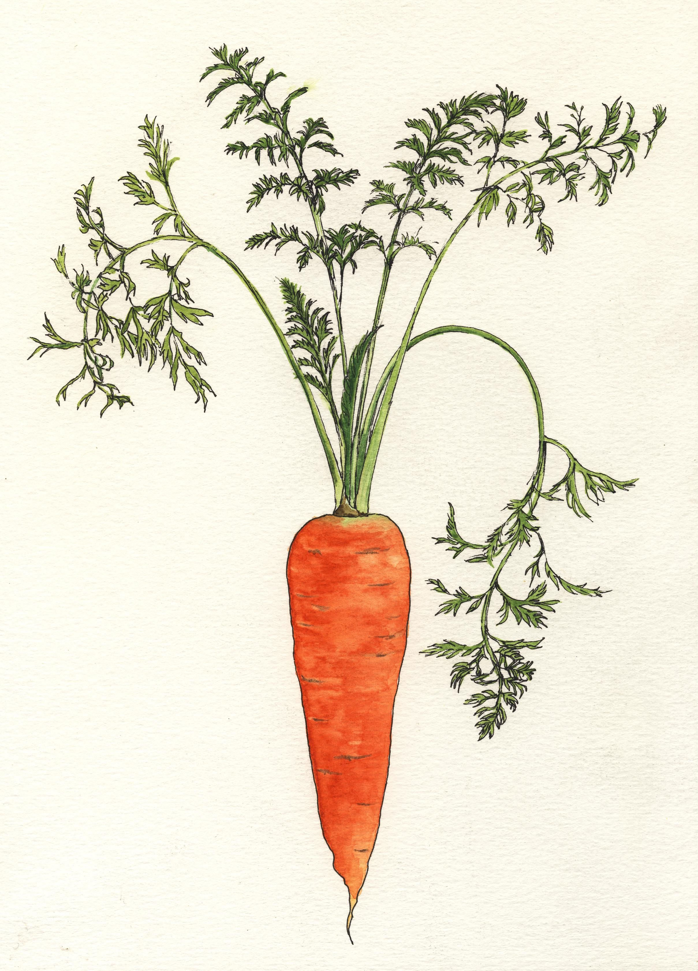 vintage science vegetable diagram - Google Search   Vintage ...