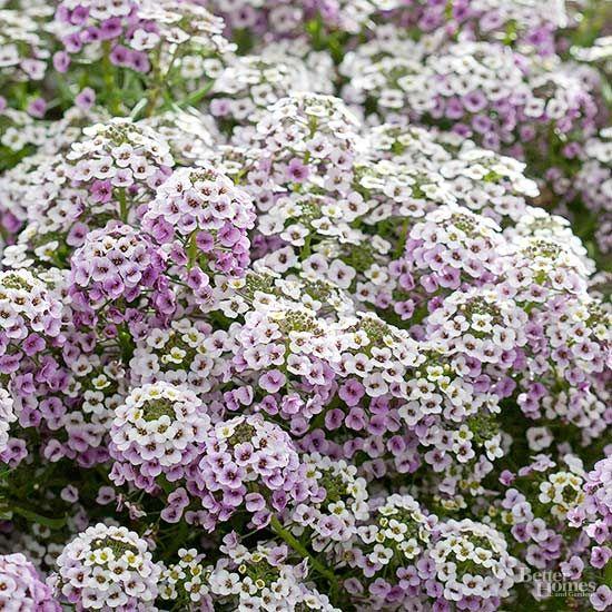 Over The Deck Herb Garden