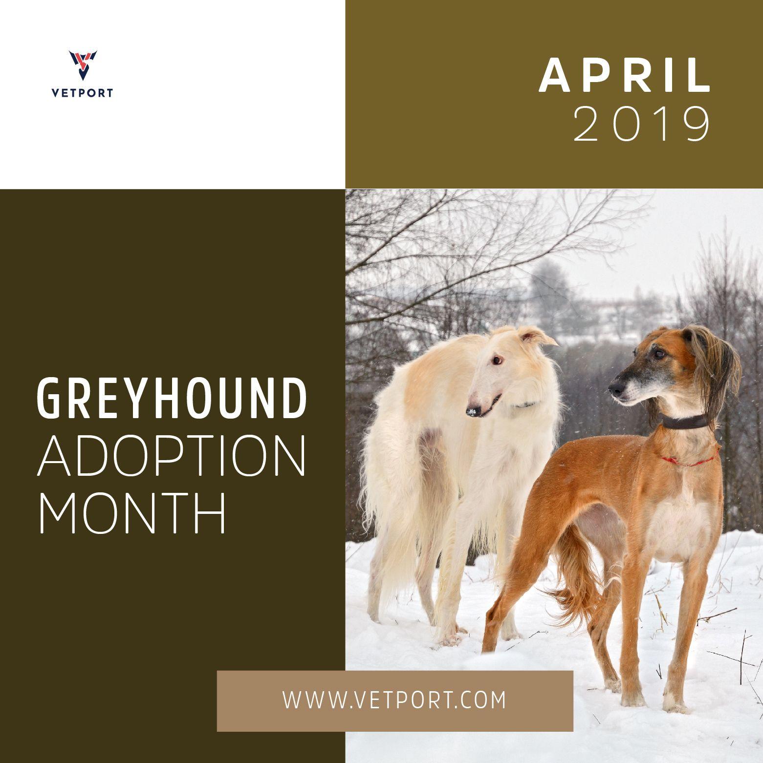 National Greyhound Adoption Month Greyhound Adoption Greyhound Veterinary