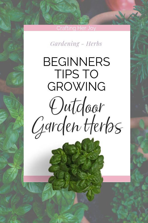 When you grow outdoor garden herbs, there are just a few basics things you need to provide the herb plants to get them to grow and thrive.  Outdoor garden herb plants are pretty tough in many cases and you can easily have a harvest within a few months.  Learn the basics of DIY garden herbs and growing herbs in pots so you can try even if you have a tiny garden or windowsill #herbs #growingherbs #outdoorherbs #gardenherbs #kleinekräutergärten