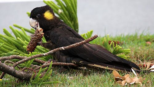 10 Fascinating Birds That Start With The Letter Y Amazing
