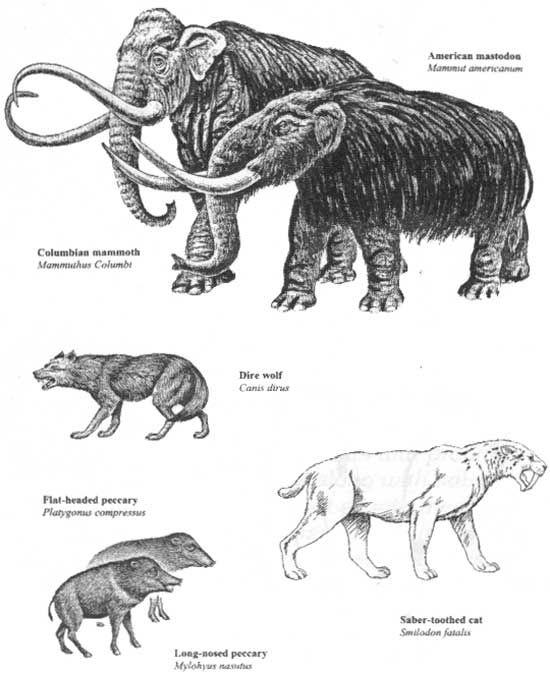 chart of ice age animals animais pre historicos floresta nacional fosseis also good for benny by pinterest rh