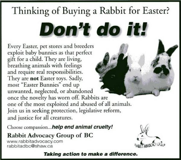 No live animals as easter gifts bunnies pinterest animal no live animals as easter gifts negle Gallery