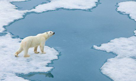 Climate Change. It is difficult for polar bears to find food due to climate change. The sea ice is melting and it is harder to find found.