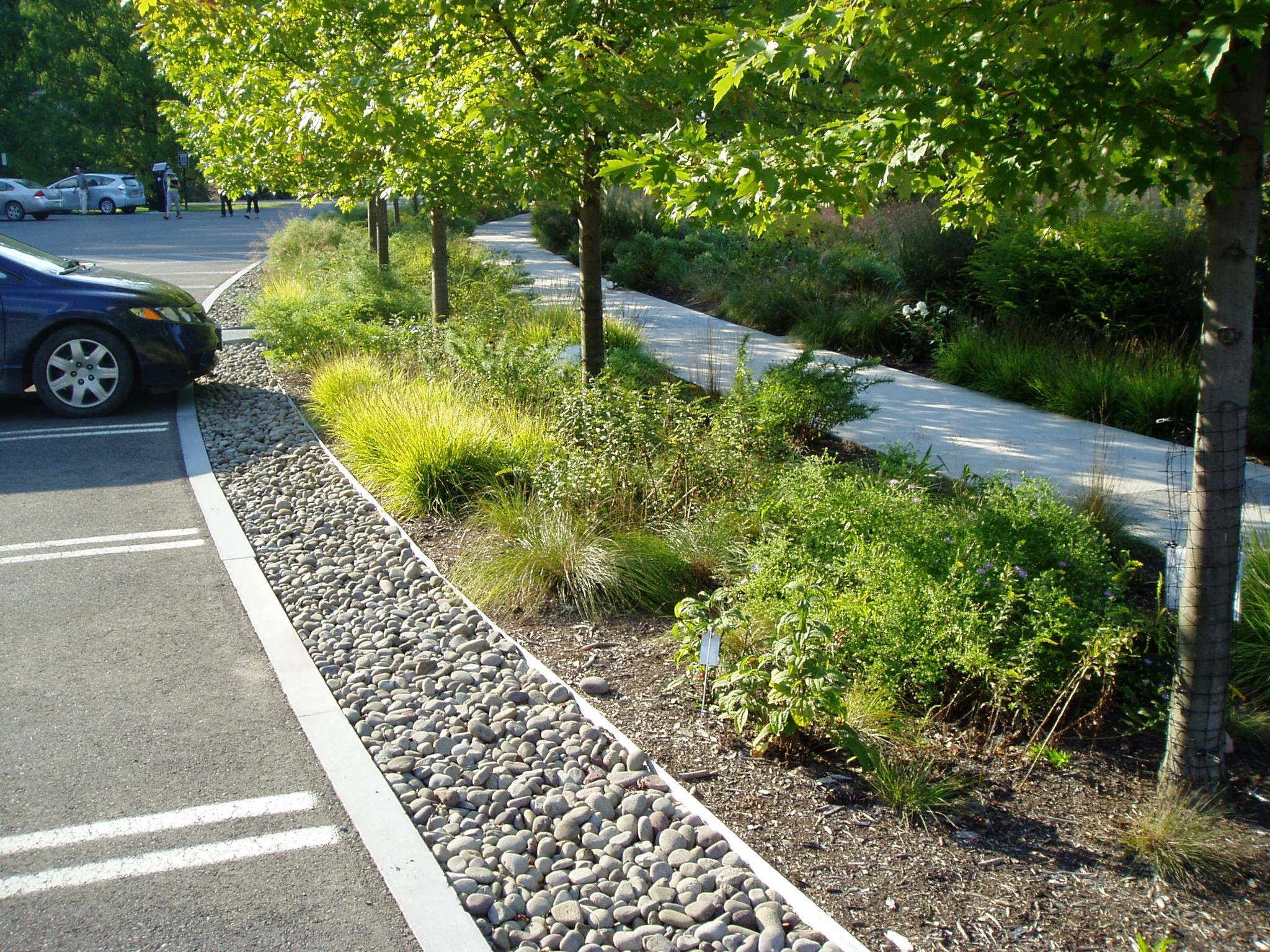 Cornell plantations bioswale estacionamento pinterest for Surface design landscape
