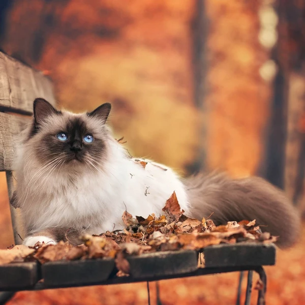 Autumn Cats 18 Images Of Cats Loving Fall Fall Cats Cats Cats And Kittens