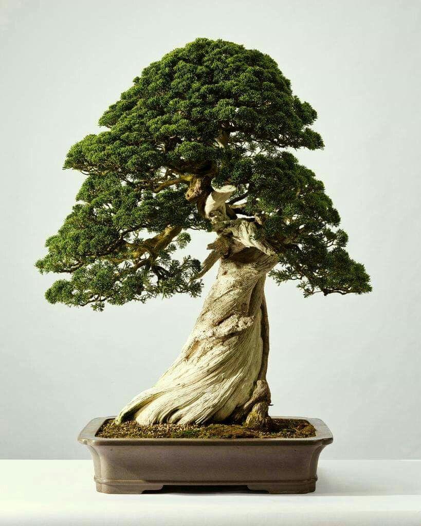 Pin Von Pe Er Auf Hobby Bonsai Bonsai Terrarium Und Plants