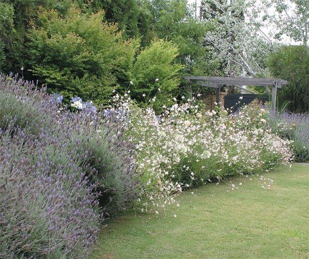 Ideas De Diseño De Jardines Residenciales: Gauras Jardin - Buscar Con Google