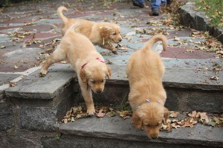 Dog Breeder Coaching