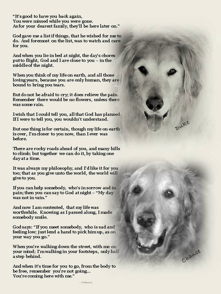 It S Good To Have You Back Again Dog Quotes Dog Poems