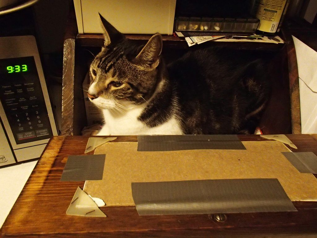 Cat In A Bread Box Maxloaf In The Bread Box  Catloaf  Pinterest  Bread Boxes