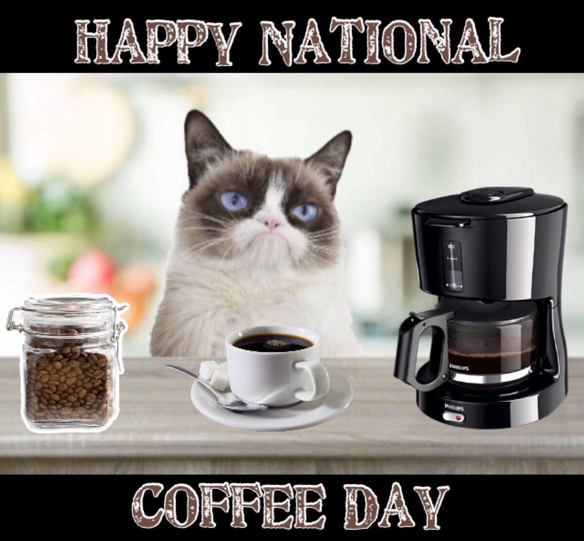 Happy National Coffee Day Grumpy cat, Grumpy cat humor