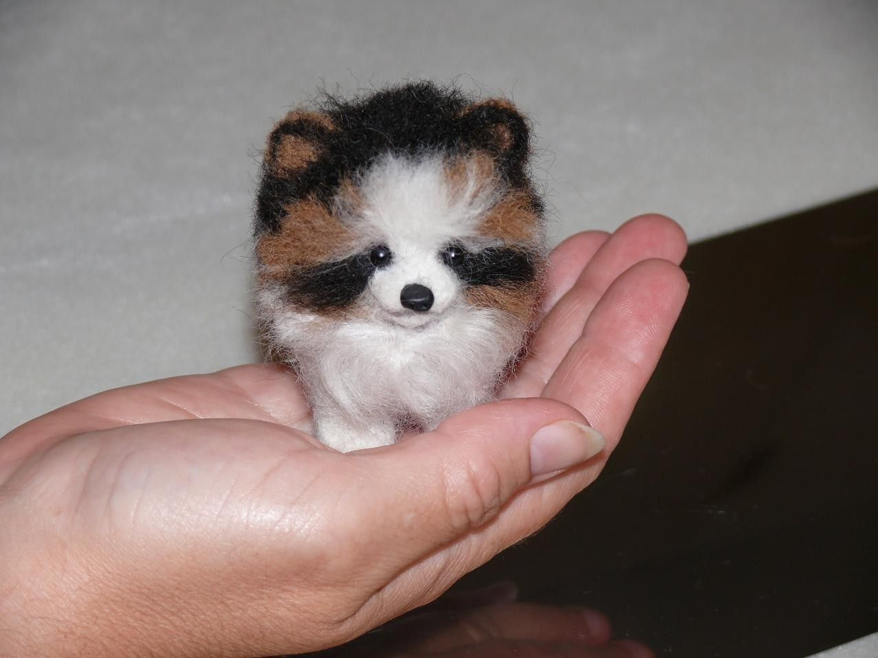 Miniature Toy Dogs : Httpm xeuminiature short haired pomeranian murah pictures
