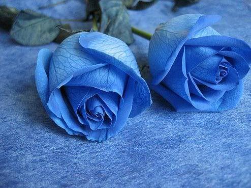 Resultado de imagen para flores AZULES Y ROJAS