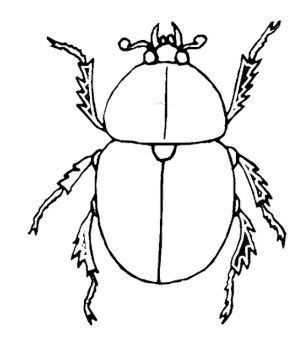 Insect Beetle Coloring Pages