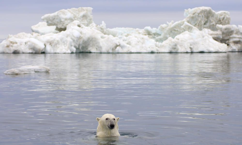 12+ How is climate change affecting animals images