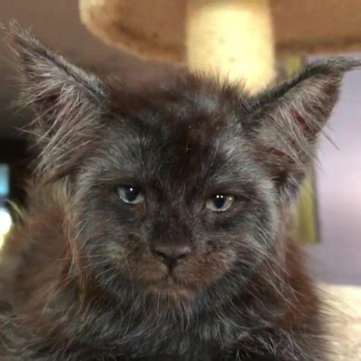 Diese Katze mit menschlichem Gesicht ist das Seltsamste, was du heute sehen wirst: Diese Fotos sind auf der ganzen Welt zu sehen - KlickDasVideo.de