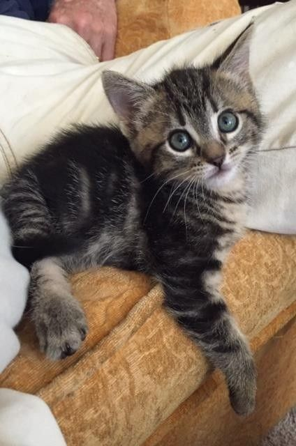 5 Kittens Found Behind Movie Theater Are Loved Like Superstars Kittens Cat Colors Cat Insurance