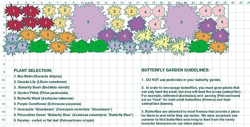 Butterfly Garden Ideas a garden plan for butterflies in the shape of butterflies from birds blooms invite Find This Pin And More On Outdoor Ideas Butterfly Garden