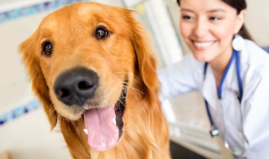 6 Tips For A Stress Free Vet Visit Pet Insurance Cost Dog Insurance Dogs